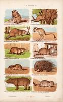 Egér, hód, csincsilla és nyúl, hiúz, litográfia 1885, eredeti, 26 x 42 cm, nagy méret, állat, nyomat