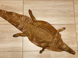 Régi, teljes,kikészített krokodilbőr.