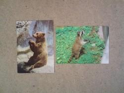 Régi képeslapok : Barna medve és mosómedve