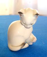 Rosenthal macska, cica