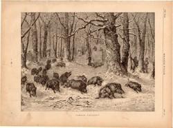 Vadkan vadászat, fametszet 1881, metszet, nyomat, 22 x 30 cm, Ország - Világ, újság, vaddisznó