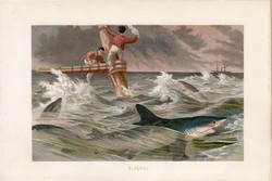 Kékcápa, litográfia 1894, színes nyomat, eredeti, német, Brehm, állat, cápa, tenger, óceán, hal
