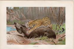 Jaguár, litográfia 1894, színes nyomat, eredeti, német, Brehm, állat, ragadozó, Amerika, dél