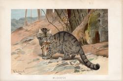 Vadmacska, litográfia 1894, színes nyomat, eredeti, német, Brehm, állat, ragadozó, Európa, Ázsia