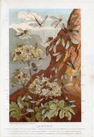 Legyek, litográfia 1907, színes nyomat, eredeti, magyar, Brehm, állat, légy, rovar, kétszárnyú