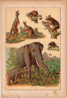 Állatok (9), litográfia 1902, eredeti, kis méret, magyar, állat, elefánt, kenguru, koala, oposszum