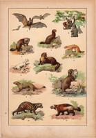 Állatok (3), litográfia 1902, eredeti, kis méret, magyar, állat, denevér, menyét, borz, vidra