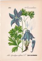 Havasi harangláb, litográfia 1882, eredeti, kis méret, színes nyomat, növény, virág Aquilegia alpina