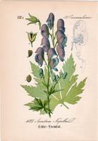 Havasi sisakvirág, litográfia 1882, eredeti, kis méret, színes nyomat, növény, virág, Aconitum nap.