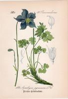 Aquilegia pyrenaica, litográfia 1882, eredeti, kis méret, színes nyomat, növény, virág, harangláb