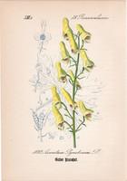 Farkasölő sisakvirág, litográfia 1882, eredeti, kis méret, színes nyomat, növény, virág, Aconitum