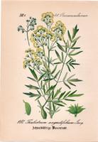 Thalictrum angustifolium, litográfia 1882, eredeti, kis méret, színes nyomat, növény, virág, borkóró
