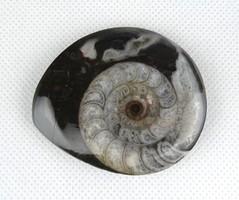 1C633 Ammonitesz fosszília csiszolat 5.5 cm