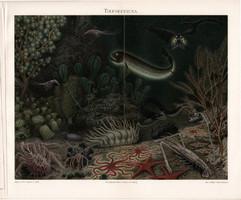 Mélytengeri állatvilág (3), litográfia 1904, német nyelvű, tenger, óceán, hal, eredeti, nyomat