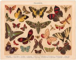 Pillangók, színes nyomat 1898, pillangó, lepke, eredeti, régi, Junonia Clelia, Papilio Sarpedon