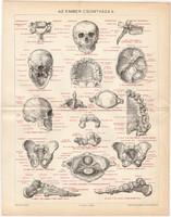 Az ember csontváza II. (2), 1895, litográfia, színes nyomat, eredeti, magyar nyelvű, koponya, csont
