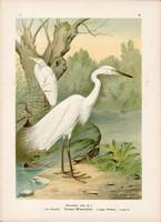 Nagy kócsag (8), litográfia 1897, eredeti, 29 x 39 cm, nagy méret, madár, színes nyomat, Herodias