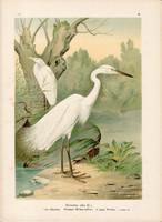 Nagy kócsag (4), litográfia 1897, eredeti, 29 x 39 cm, nagy méret, madár, színes nyomat, Herodias