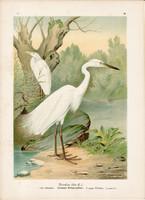Nagy kócsag (1), litográfia 1897, eredeti, 29 x 39 cm, nagy méret, madár, színes nyomat, Herodias