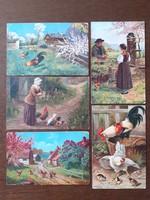 Régi képeslap 1920 körül baromfiudvar kakas csibe képes levelezőlap 5 db