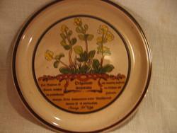 Gyűjtői botanikás fűszernövény majorannás Tejkl design tányér