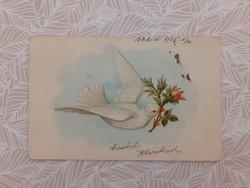 Régi képeslap 1905 galambos rózsás levelezőlap
