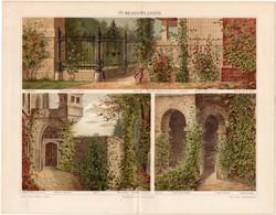 Kúszónövények (3), litográfia 1897, német nyelvű, eredeti, színes nyomat, növény, virág, futónövény