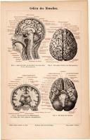 Az emberi agy, színes nyomat 1888, német nyelvű, litográfia, eredeti, anatómia, ember, gyógyászat