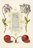 Kalligráfia botanikai illusztráció aranyozott dísz cseresznye harangláb 16.sz antik kézirat reprint