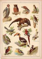 Madár, héja, sas, kakukk, bagoly, jégmadár, litográfia 1899, eredeti, 24 x 34 cm, nagy méret, állat