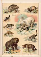 Hiéna, borz, jegesmedve, medve, mosómedve, litográfia 1899, eredeti, 24 x 34 cm, nagy méret, állat