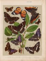 Magyarország lepkéi (8), litográfia 1907, színes nyomat, lepke, pillangó, hernyó, Apatura Iris, Ilia