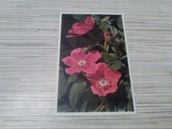 Régi képeslap. Virágok.