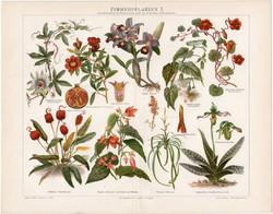 Szobanövények I, litográfia 1898, német nyelvű, eredeti, színes nyomat, növény, virág, beltéri