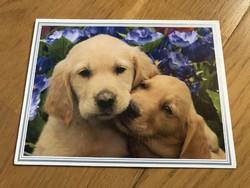 Golden Retriever kiskutyás képeslap