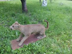 Puma trófea, prepatátum.