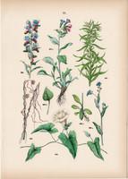 Sövényszulák, aranyfonalfű, kígyószisz, orvosi tüdőfű, gyöngyköles litográfia 1884, növény, virág