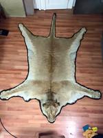 Oroszlán szőnyeg