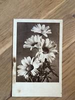 Margaréta virág képeslap - 1954