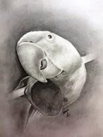Animal good faces! Parrot portrait, graphics, on paper, signed, single copy, glazed frame
