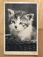 Antique kitten postcard - 1937